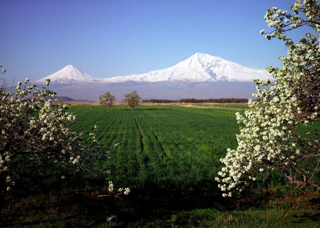 Yerevan Ararat
