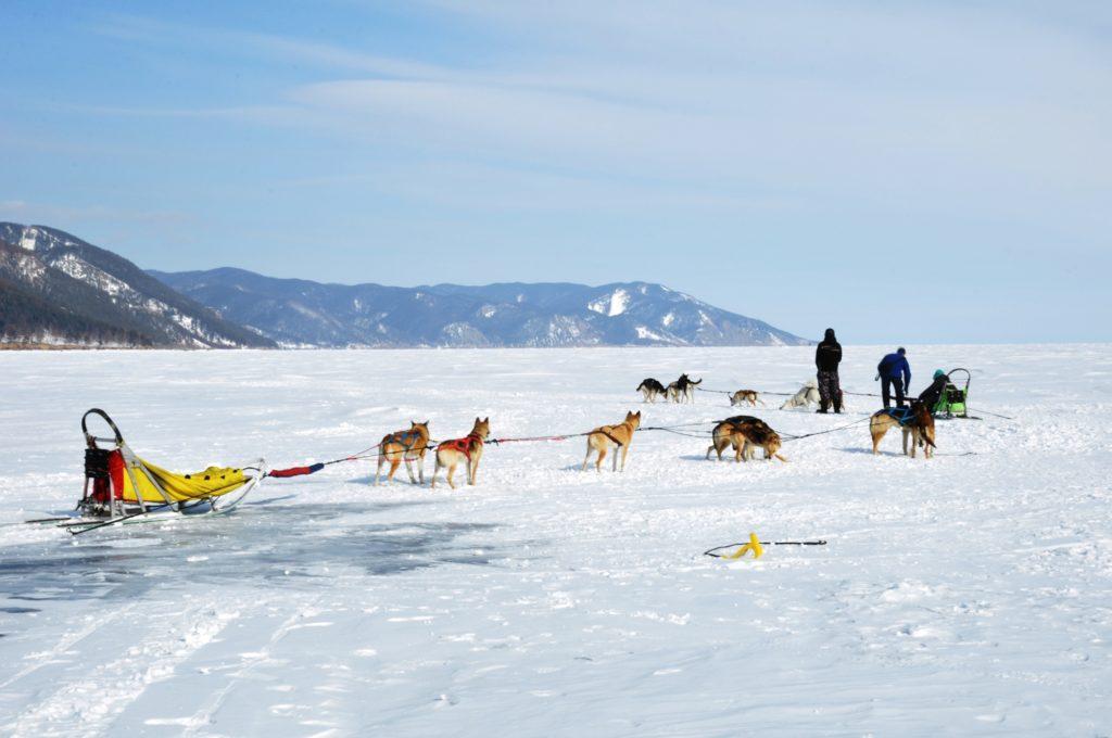 Dog sledging on Lake Baikal, Russia
